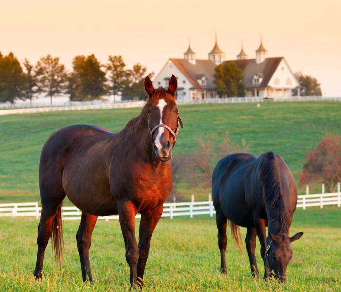 hourse farm business insurance