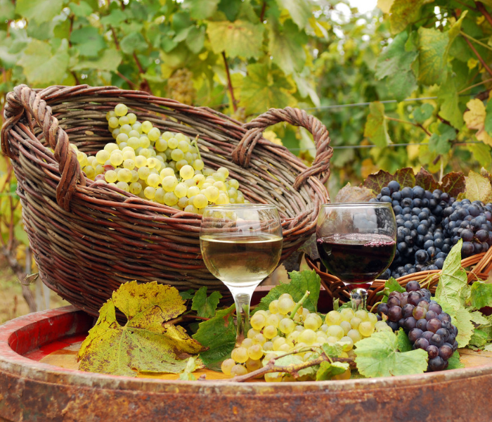 Vineyard and Winery business Insurance