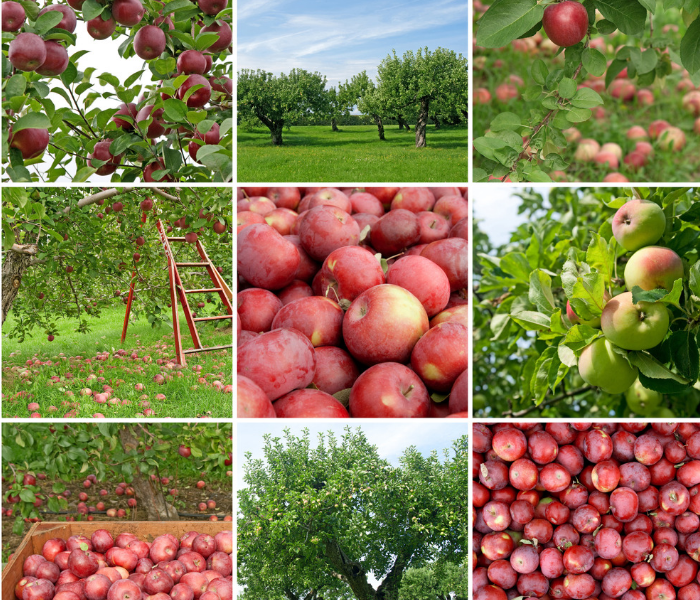 business insurance for apple orchard